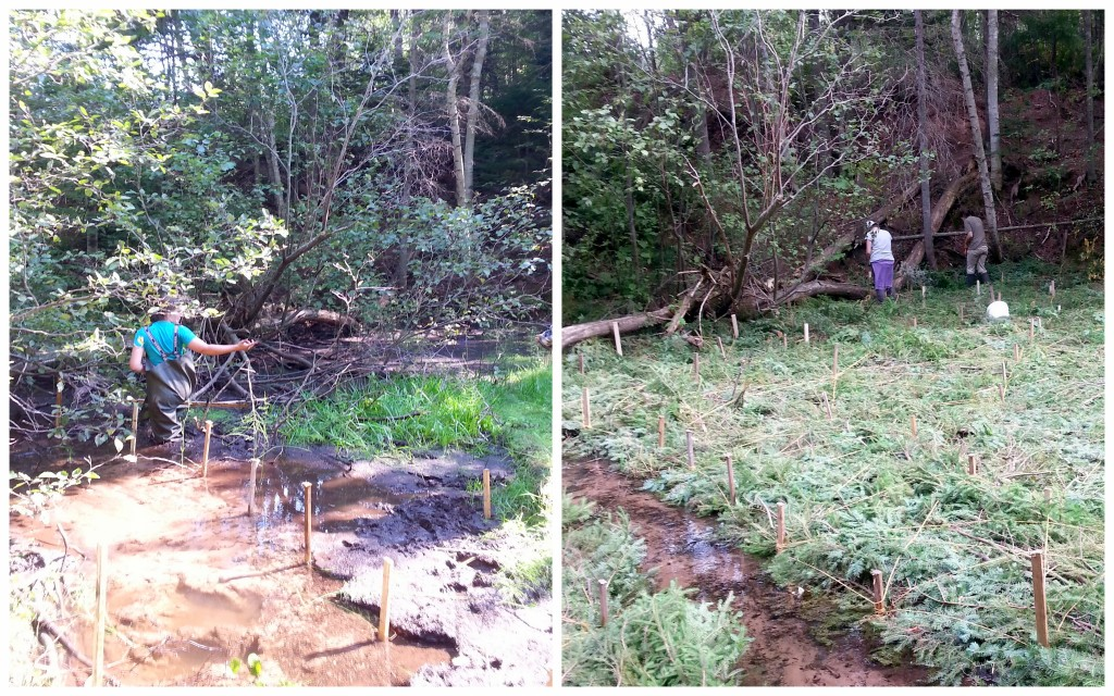 Before and After - Friston brush mats