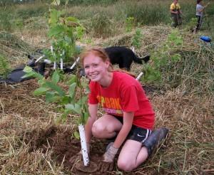 tree planting - crop